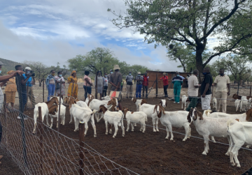 IREMA hands over goats, fodder and fuel efficient valued at N$ 3.2 million